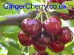 GingerCherry